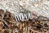 Plastic spring washed up at Petit Port on Guernsey's south coast on 18th October 2019
