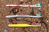 Three toothbrushes collected on the shore at Petit Port on Guernsey's south coast on 3rd November 2020