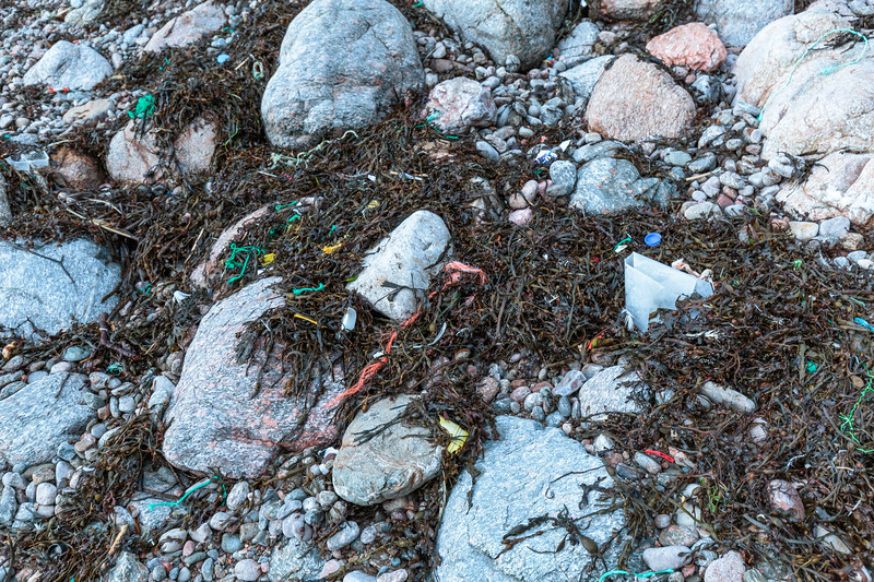 Seaweed strand line litter at Petit Port on Guernsey's south coast on 10th January 2016