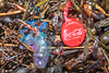 Portuguese man o' war and a plastic Coca Cola bottle top in the seaweed strand line at Petit Port on  20th February 2020