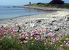 The Guernsey sea shore at Champ Rouget, Chouet on 8 June 2007