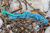 Braided polypropylene twine and frayed plastic fibre at Petit Port on Guernsey's south coast on 26th February 2020