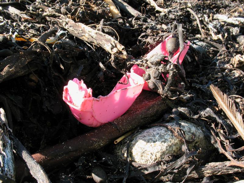 Plastic litter in the strand line
