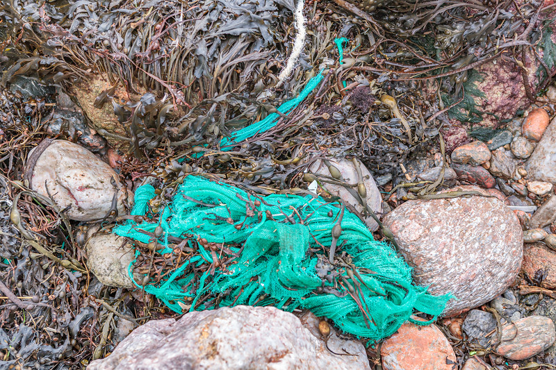 Fine mesh netting washed up in the seaweed strand line at Petit Port on Guernsey's south coast on 16th January 2014