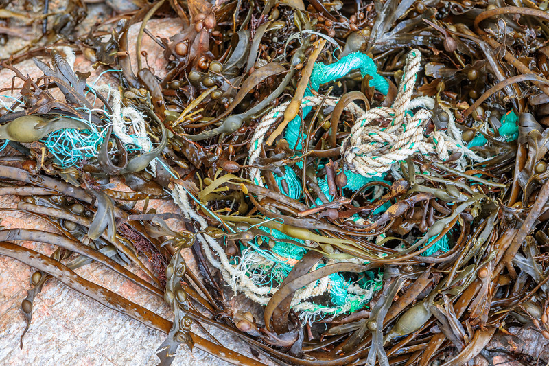 Rope in the seaweed strand line at Petit Port on Guernsey's south coast on 28th November 2019