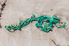 Braided, knotted polypropylene twine washed up at Petit Port on Guernsey's south coast on 7th May 2020