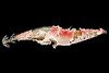 Squid jig lure collected from Petit Port on Guernsey's south coast