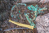 Seaweed strand line litter at Petit Port on Guernsey's south coast on 16th January 2014