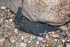 Large piece of black plastic fish box washed up at Petit Port on Guernsey's south coast on 10th March 2020