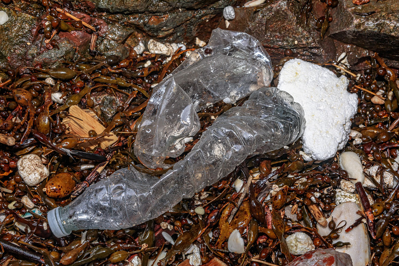 Plastic bottles & polystyrene litter in seaweed strand line at Petit Port on Guernsey's south coast on 10th March 2020