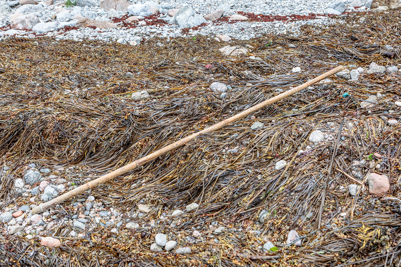 Bamboo poles used to mark strings of pots frequently wash up at Petit Port  on Guernsey's south coast