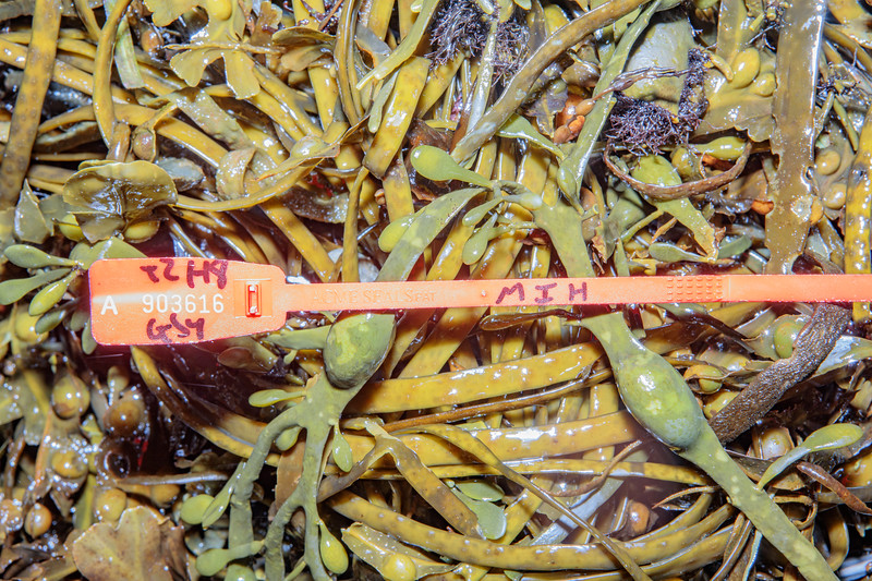 Plastic security tag washed up at Petit Port on Guernsey's south coast on 25th October 2019