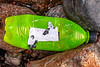 Plastic bottle washed up at Petit Port on Guernsey's south coast on 13th February 2020