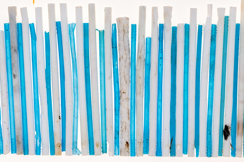Plastic sticks washed up on the Guernsey sea shore
