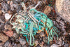 Frayed rope washed up at Petit Port on Guernsey's south coast on 13th February 2020