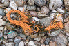 Fraying orange string washed up at Petit Port on Guernsey's south coast on the 30th January 2021
