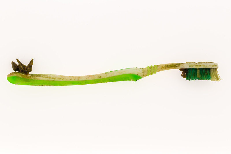 Toothbrush sea shore litter with barnacles attached