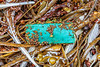 Plastic shotgun cartridge case washed up at Petit Port on Guernsey's south coast