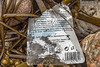 Shampoo bottle plastic label from the Czech Republic at Petit Port on Guernsey's south coast on the 26th May 2021