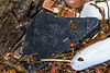 Black plastic piece washed up at Petit Port on Guernsey's south coast on 15th February 2020