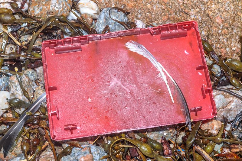 Red plastic lid in the seaweed strand line at Petit Port on Guernsey's south coast on 10th March 2020