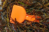 Orange toy spade in the seaweed strand line at Petit Port on Guernsey's south coast on 26th January 2020