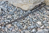 Long strip of angled black plastic on a Guernsey north coast pebble and cobble shore on the 22nd September 2021
