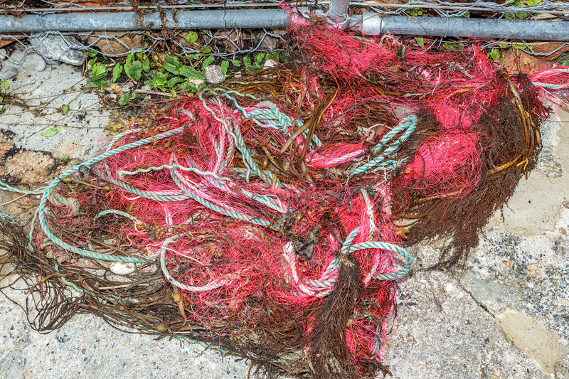 Gill net with head rope and plastic floats at Petit Port on Guernsey's south coast