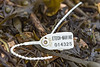 Etech Marine security tag in the seaweed strand line of Fermain Bay on Guernsey's east coast on 11th February 2021