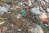 Seaweed strand line litter at Petit Port on Guernsey's south coast on 16th February 2014