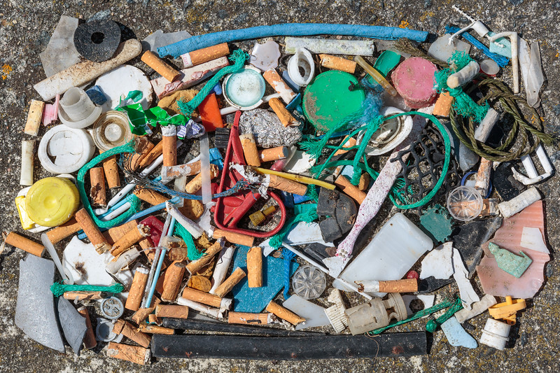 Small pieces of plastic litter collected from a seaweed strand line at L'Eree on Guernsey's west coast on 30th April 2016