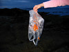 How does a B & Q plastic carrier bag get into a tide pool on the seashore at La Valette on Guernsey's east coast?   This plastic bag was photographed and removed from the seashore on the 8 July 2007.<br /> File No. 080707 8908<br /> ©RLLord<br /> fishinfo@guernsey.net