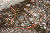 Rope washed up at Petit Port on Guernsey's south coast on 9th February 2020
