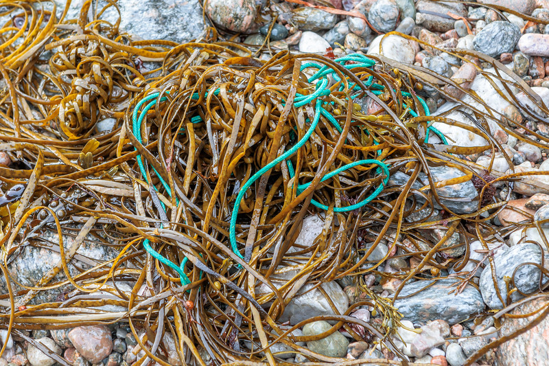Nylon twine or rope in seaweed strand line at Petit Port on 26th September 2019