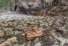 Wood pallets commonly wash up at Petit Port on Guernsey's south coast. Wave action usually breaks them up into pieces.