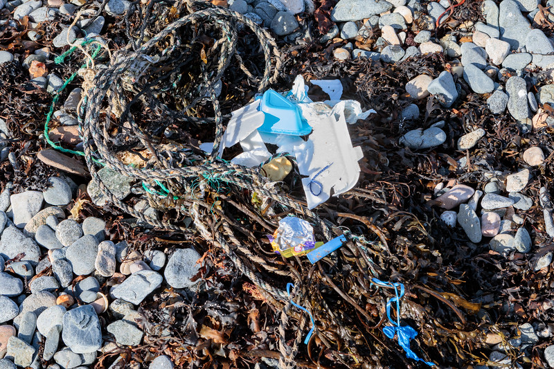 Polystyrene pieces, plastic yoghurt container, balloon, and rope in the seaweed strand-line on Belle Greve Bay