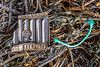 Polypropylene plastic litter washed up on the seaweed strand line at Petit Port on 31st October 2020
