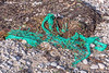 A piece of fishing net washes up on Belle Greve Bay on Guernsey's east coast on 5th October 2013
