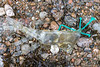 Piece of Tahitian plastic skirt and polyethylene twine at Petit Port on Guernsey's south coast on 21st January 2021