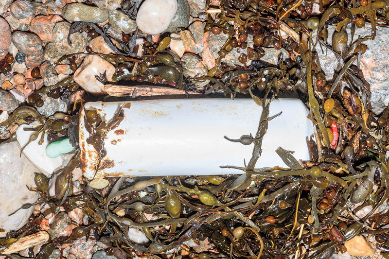 A plastic bottle in the seaweed strand line at Petit Port on Guernsey's south coast