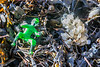 Plastic toy in the seaweed strand line at Petit Port on Guernsey's south coast on 7 March 2019