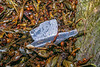 Hard plastic piece of litter washed up at Petit Port on Guernsey's south coast on 9th February 2020