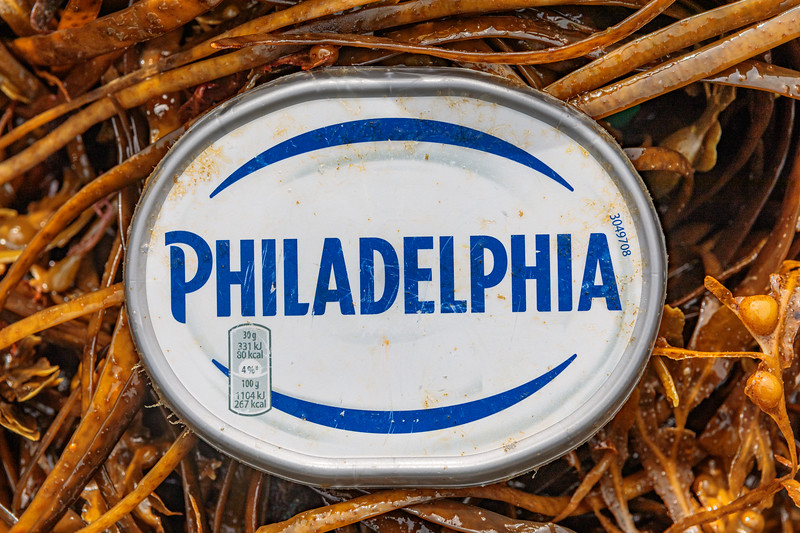 Philadelphia cream cheese plastic lids are a common litter item at Petit Port on Guernsey's south coast
