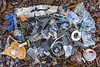 Litter collected from a small bay at Pleinmont on Guernsey's south west coast on 26th February 2021