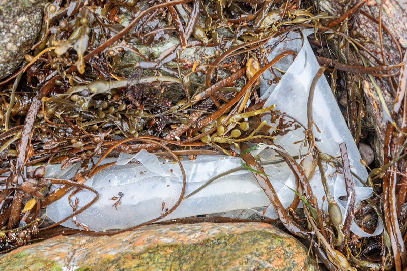 Rolled up plastic Tahitian skirt used to protect mussels from crab predation washed up at Petit Port  on 14th January 2020