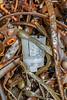 Plastic shotgun cartridge wad washed up at Petit Port on Guernsey's south coast on 2nd November 2020