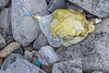 'Mother to Bee' balloon 'as found' east of Fort Le Marchant on Guernsey's north coast on the 24th September 2021