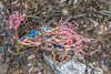 Frayed rope or string in the eastern gully at Petit Port on Guernsey's south coast on the 14th March 2021
