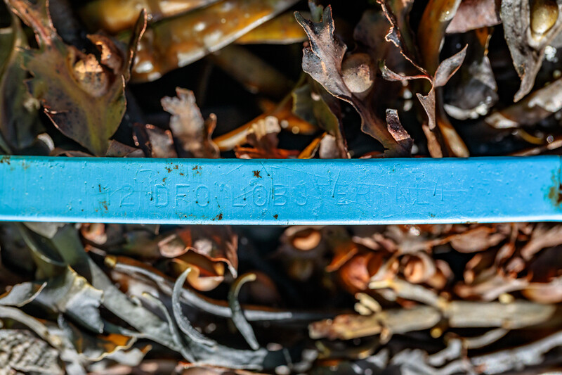 A piece of plastic Canadian lobster pot tag washed up at Petit Port on Guernsey's south coast on 2nd November 2020