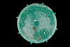 Dr ING. W. Frohn GMBH & Co. screw top lid made in January 2011 and collected from Petit Port on Guernsey's south coast